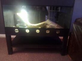 For sale vivarium !!
