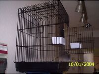 2 x blue male budgies PLUS LARGE CAGE 20.00