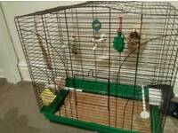 Male finches with cage