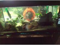 Piranha full set up