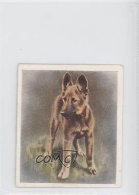 1936 Godfrey Phillips Our Puppies Tobacco The Alsatian #21 0f3 for sale  Shipping to Nigeria
