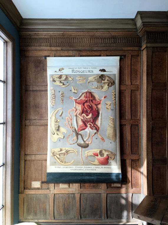 Antique Pull Down Chart, Rodents Anatomy Chart, Remy Perrier & Cepede