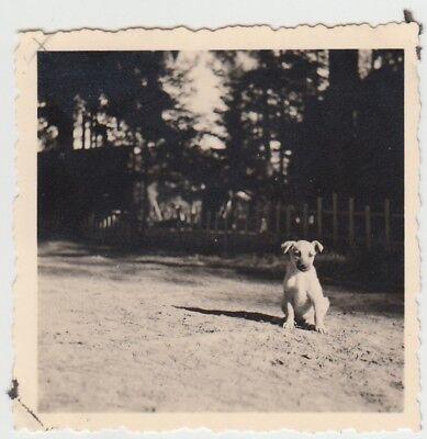 (F27692) Orig. Foto kleiner Hund im Freien 1930/40er