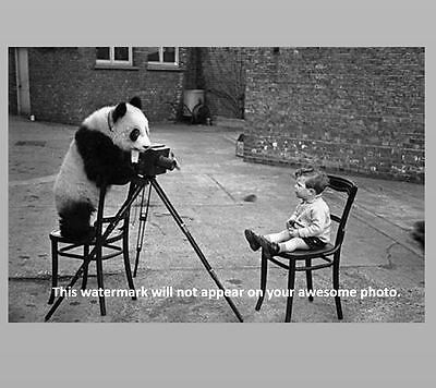 Crazy Panda Bear Photographer PHOTO Boy Child Weird Creepy Strange Art Print
