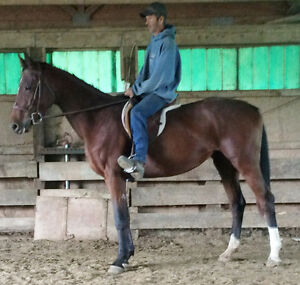 HorseTraining,Lessons,Sales,Hauling,Farrier,Board,StallBarn rent