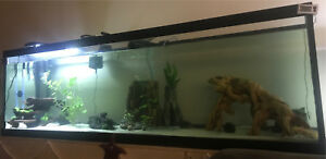 Fish tanks 125g,2x 55g