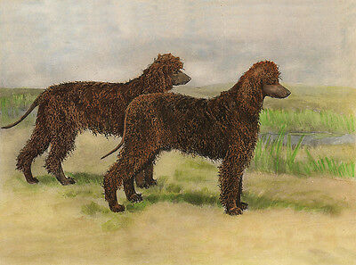 IRISH WATER SPANIEL CHARMING DOG GREETINGS NOTE CARD LOVELY DOGS IN RURAL SCENE