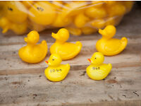 Plastic Yellow Ducks for a 'Duck Race' (Approximately 1500)