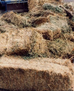 Old straw or hay