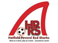 Hatfield Peverel Red Sharks (Under 8 football team)