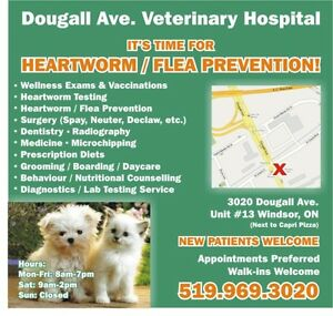 Dougall Avenue Veterinary Hospital (25% Discount)