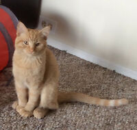 LOST 1 YR OLD ORANGE FEMALE SAGE/MESA
