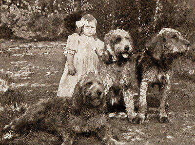 OTTERHOUND CHARMING DOG GREETINGS NOTE CARD, LITTLE GIRL AND THREE DOGS