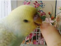 Looking for a Budgie Aviary for my bird