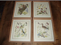 Nature Prints - framed set of 4 by Marjorie Blamey - Limited Edition