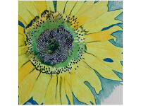 SUNFLOWER ECO : Eco friendly cleaner available for private/domestic houses (Fully insured)
