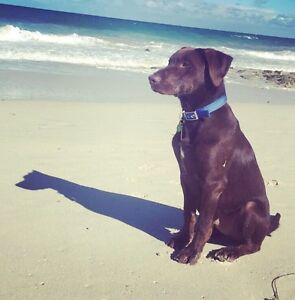 Looking for someone to pet sit Quinns Rocks Wanneroo Area Preview