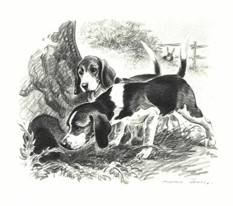 Beagle - Morgan Dennis Dog Print - MATTED