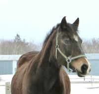 Horse farm looking for stable hand