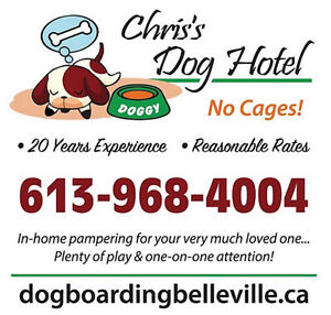 Chris's Dog Hotel No Cages