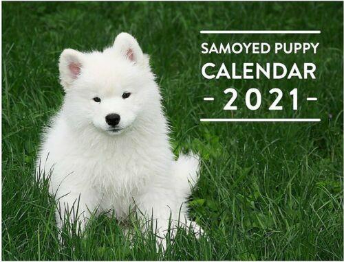 2021 Samoyed Puppy Calendar