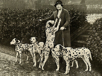 DALMATIAN CHARMING DOG GREETINGS NOTE CARD LADY AND FIVE BEAUTIFUL DOGS