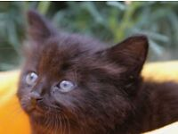 Kitten looking for home