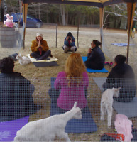 Goat Yoga Therapy for lots of fun, smiles and laughter therapy!