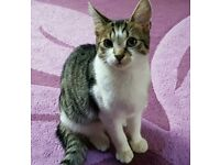 4 month old male tabby kitten.. has had his 1st injections