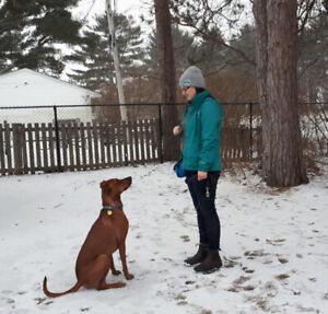 Attentive, Experienced Dog Walker!