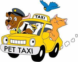 Kimberly's Pet Taxi & Pet services Hobart CBD Hobart City Preview