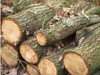 Tree LOGS collected and removed - Tameside/Greater Manchester