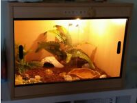 2ft wooden vivarium