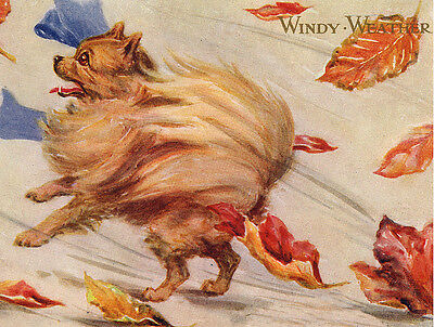 POMERANIAN CHARMING DOG GREETINGS NOTE CARD BEAUTIFUL POM WALKING IN THE WIND