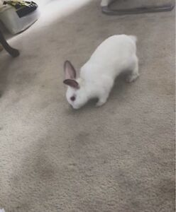 Bunny in desperate need of new home