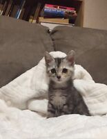 female kitten looking for a new home