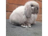 friendly tane bunnies