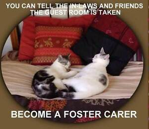 FOSTER CARERS FOR CATS/KITTENS Medowie Port Stephens Area Preview