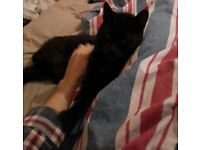 Black cat male missing Thurnscoe may