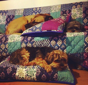 House Sitting / In-Home Pet Care - Insured & Bonded