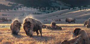 Nancy Glazier - The Hidden Valley - Buffalo Bison Art Print S&N with certificate