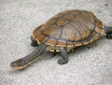 Wanted: Home offered to unwanted Turtles