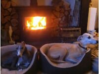PET FRIENDLY HOLIDAY COTTAGE (Well behaved adults welcome)