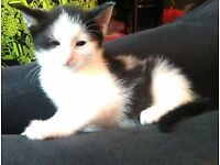 Kittens for sale ready now :)