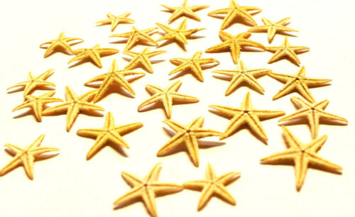 """100 Tiny Mini Starfish Tan Flat Natural (13-25mm) 1/2 - 1"""" Beach Crafts Decor"""