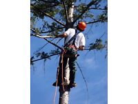 Green leaf tree services & property maintenance