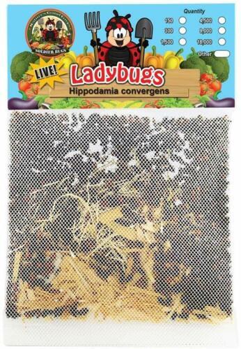 1,500 Live Ladybugs & 2 Praying Mantis Eggs in Hatching Habitat Bag