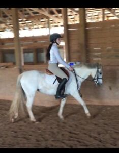 Small pony for sale or lease