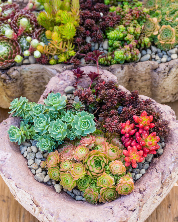 Delightful 5 Tips For Container Gardening