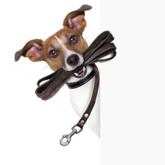 Em's Dog Walking and Pet Minding! Stirling Adelaide Hills Preview